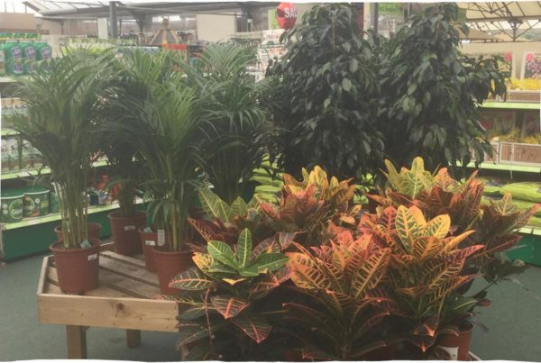 house-plants-offer